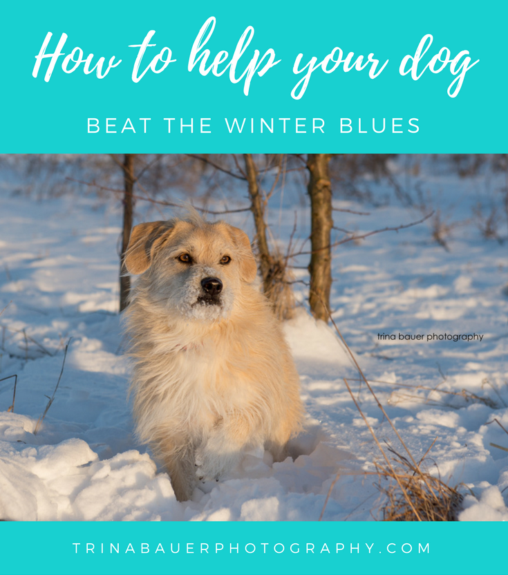 How to help your dog beat the winter blues