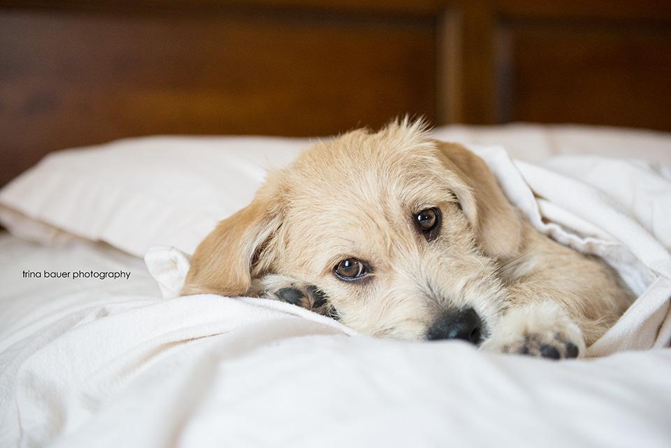 Kita sleeping in bed