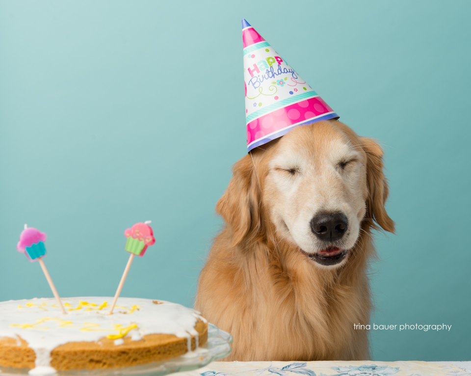 golden retriever birthday cake smash 1