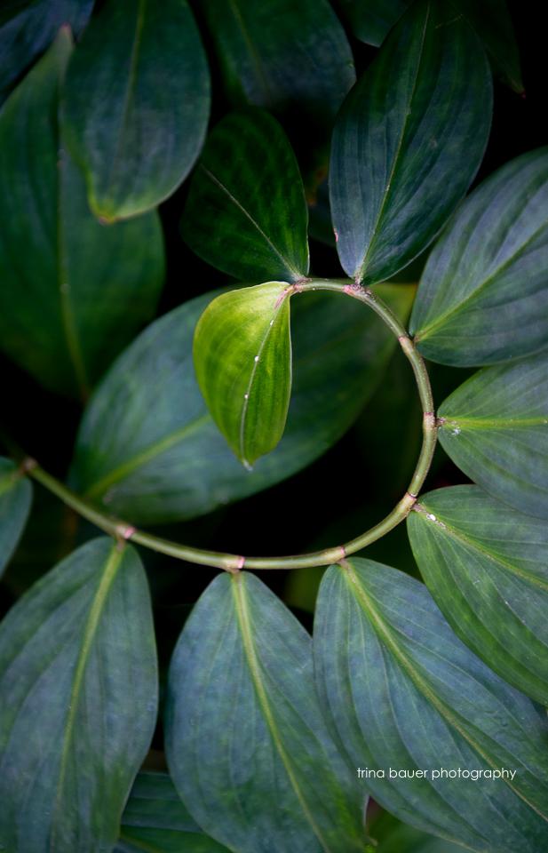 leaves on plants