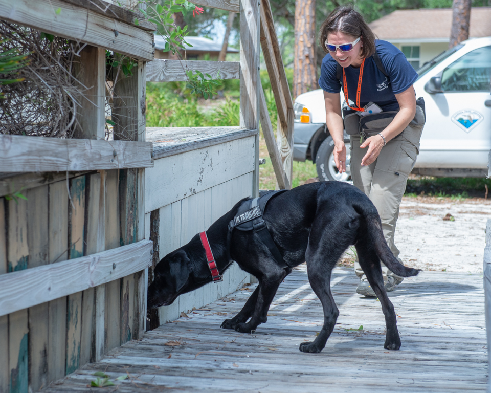 Sarasota K9 search and rescue lab