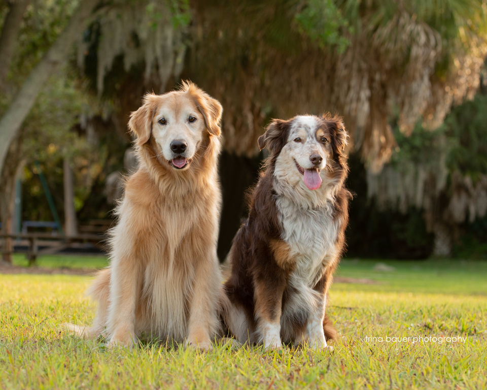 dogs at Phillippi Estate Park