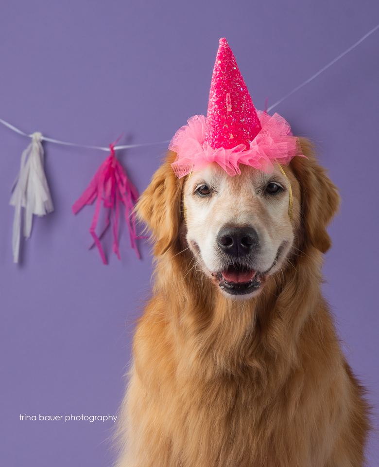 golden retriever birthday hat