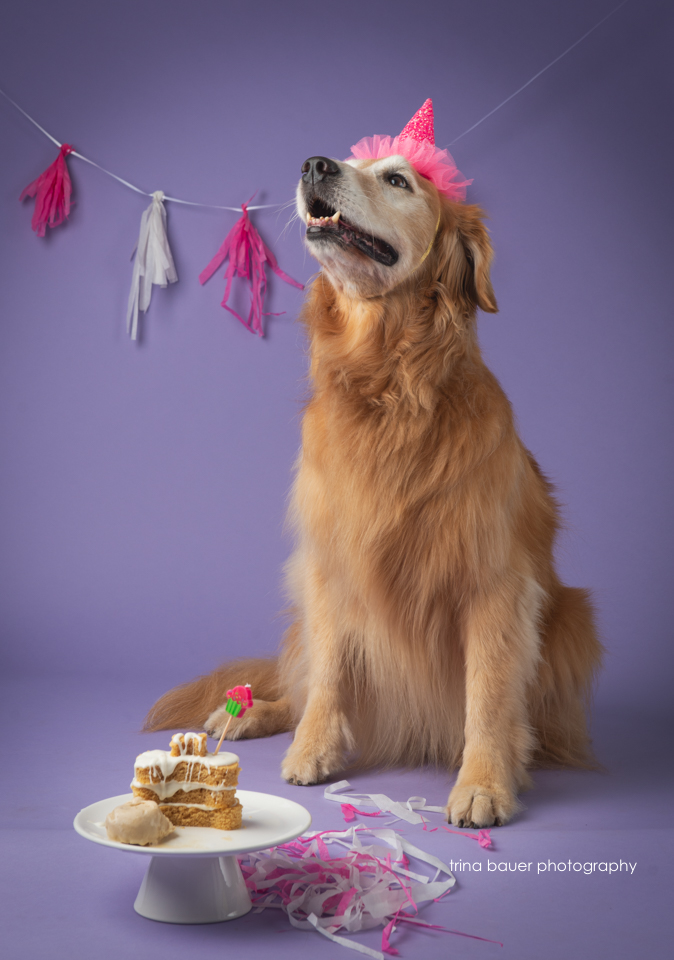 golden retriever birthday party