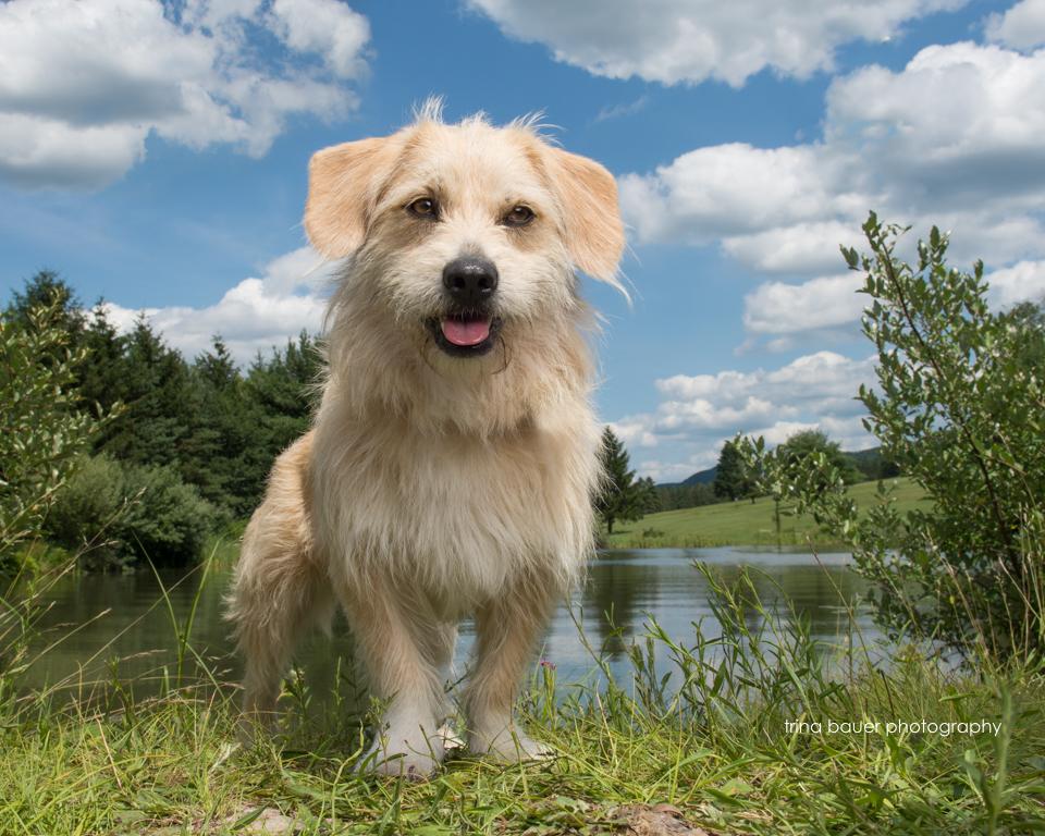 terrier mix near pond