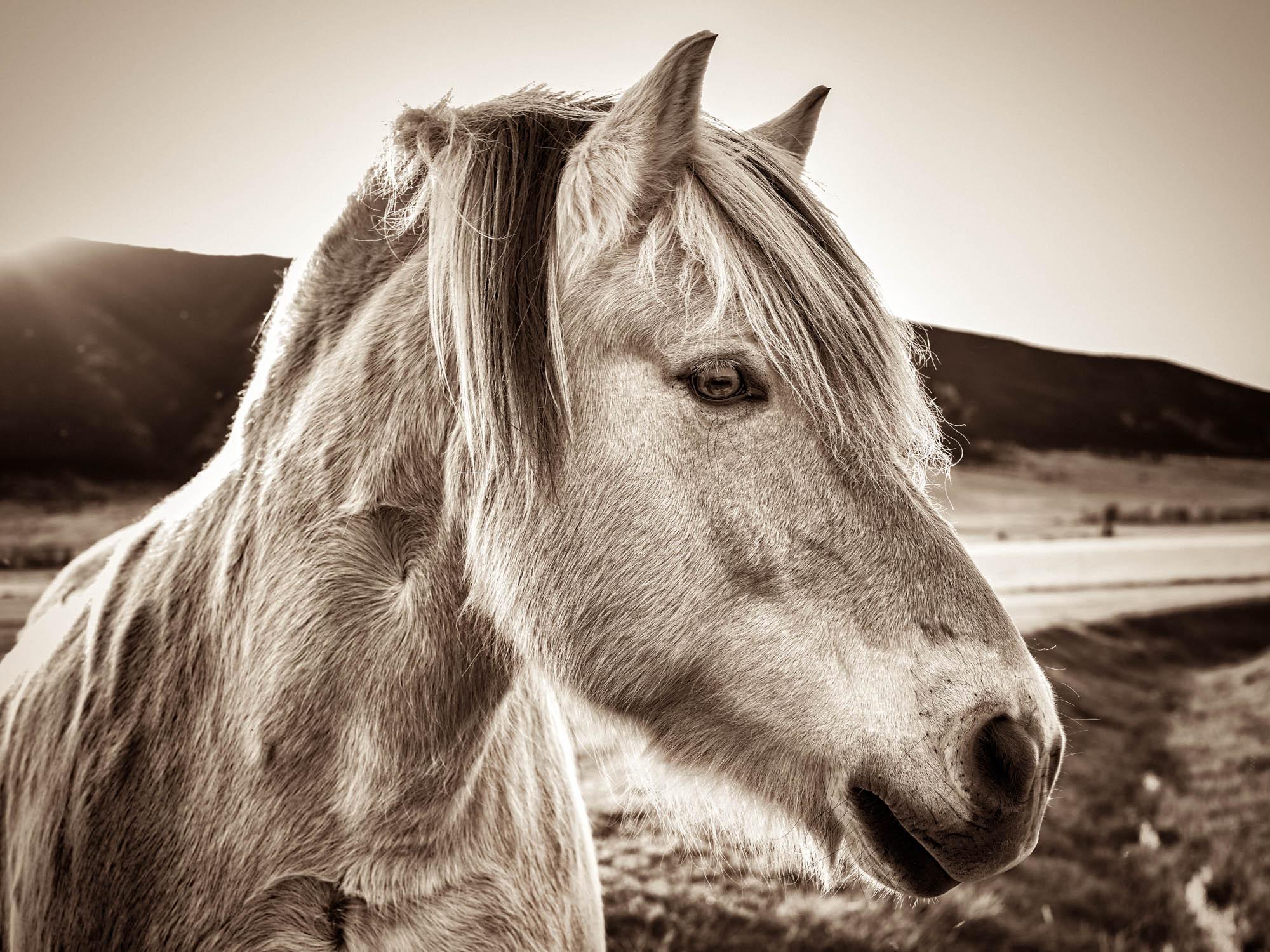 horse head Sozinho Imagery