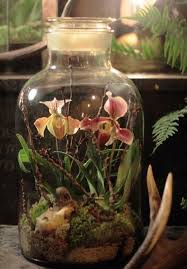 Victorian Terrariums with flowers