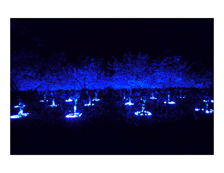 black_light_night_white_garden_3.jpg