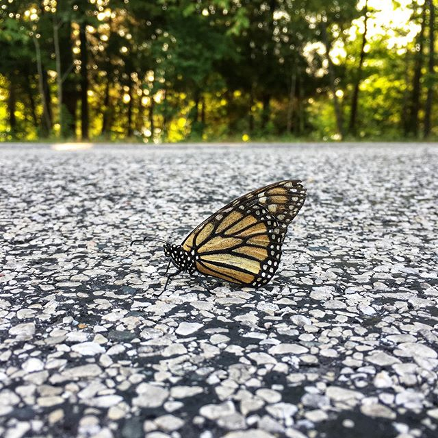 Morning 🦋🌞#letsgo #butterfliesofinstagram #streetstyle