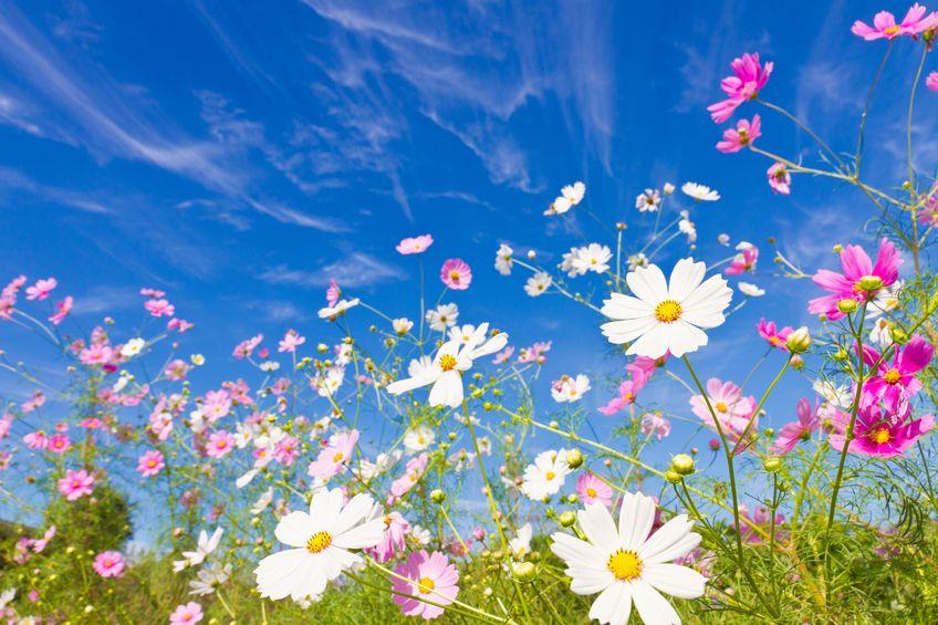 flowers-in-field.jpg