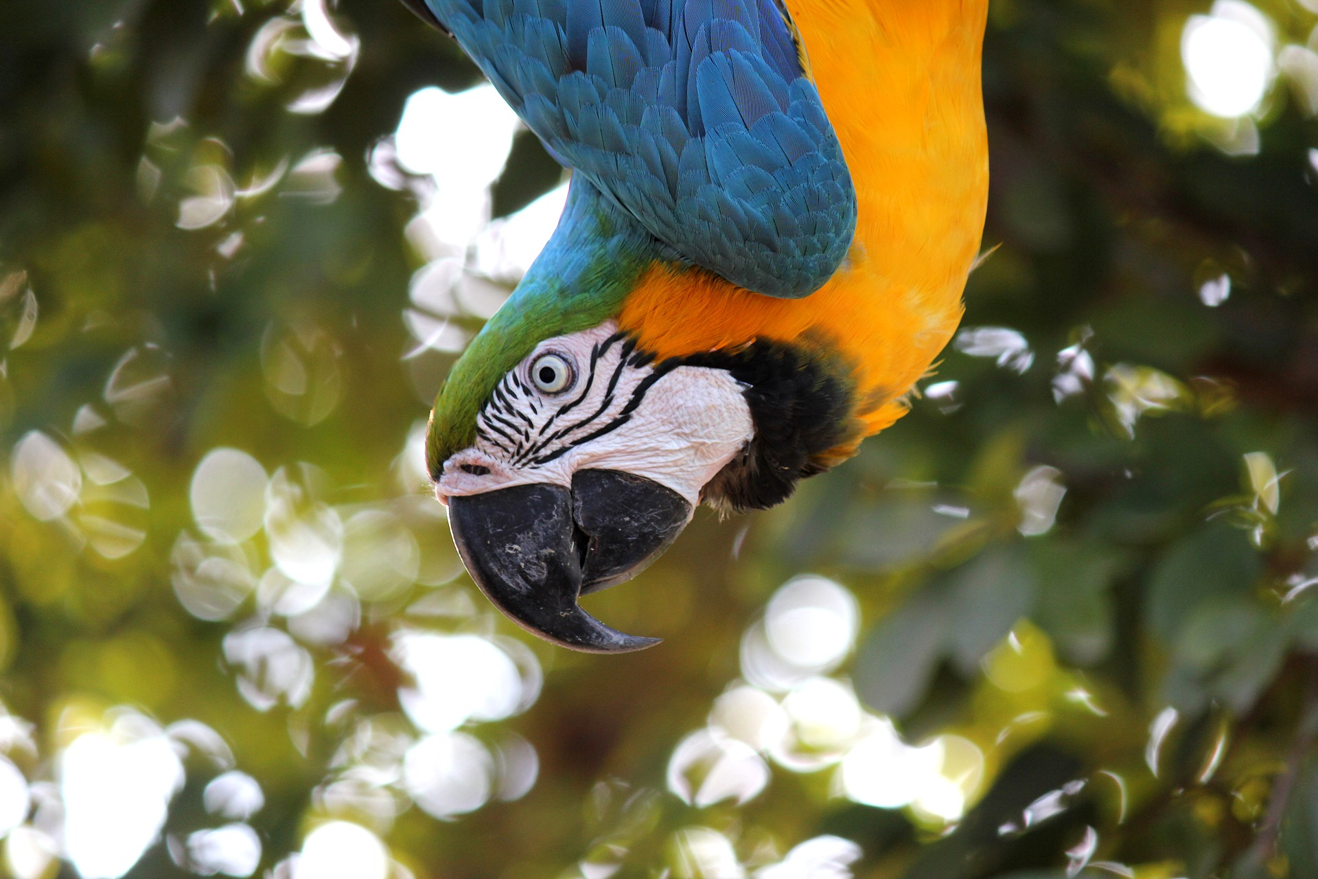 macaw-1817586_1920.jpg