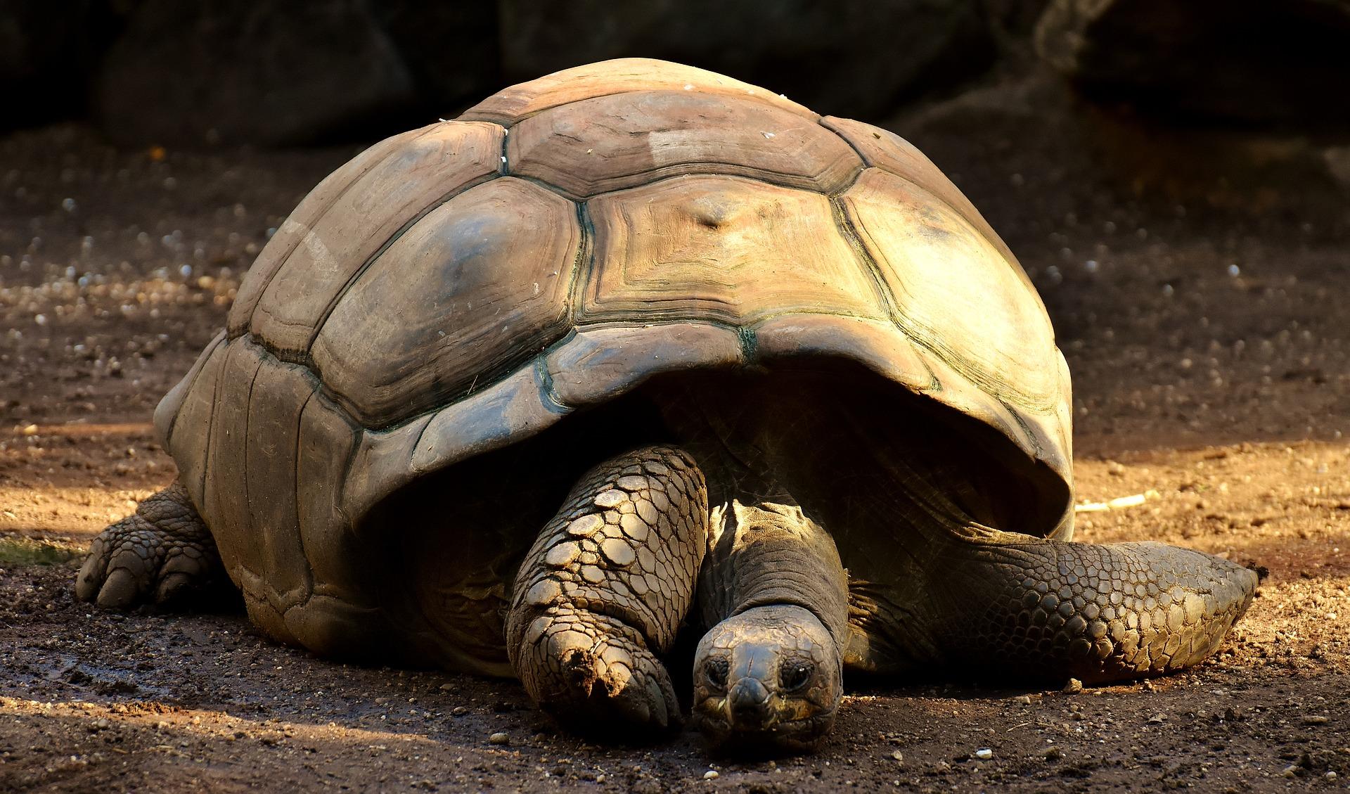 giant-tortoises-2872006_1920.jpg