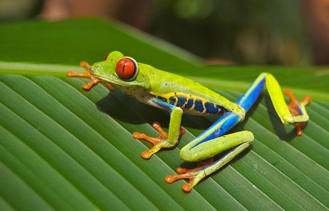 tree-frog-69813_640.jpg