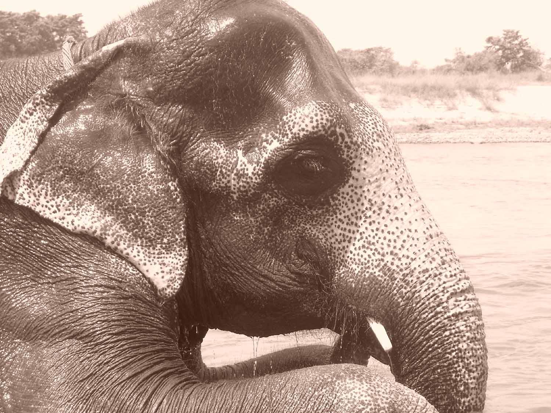 Elephant 4 Close Up.jpg