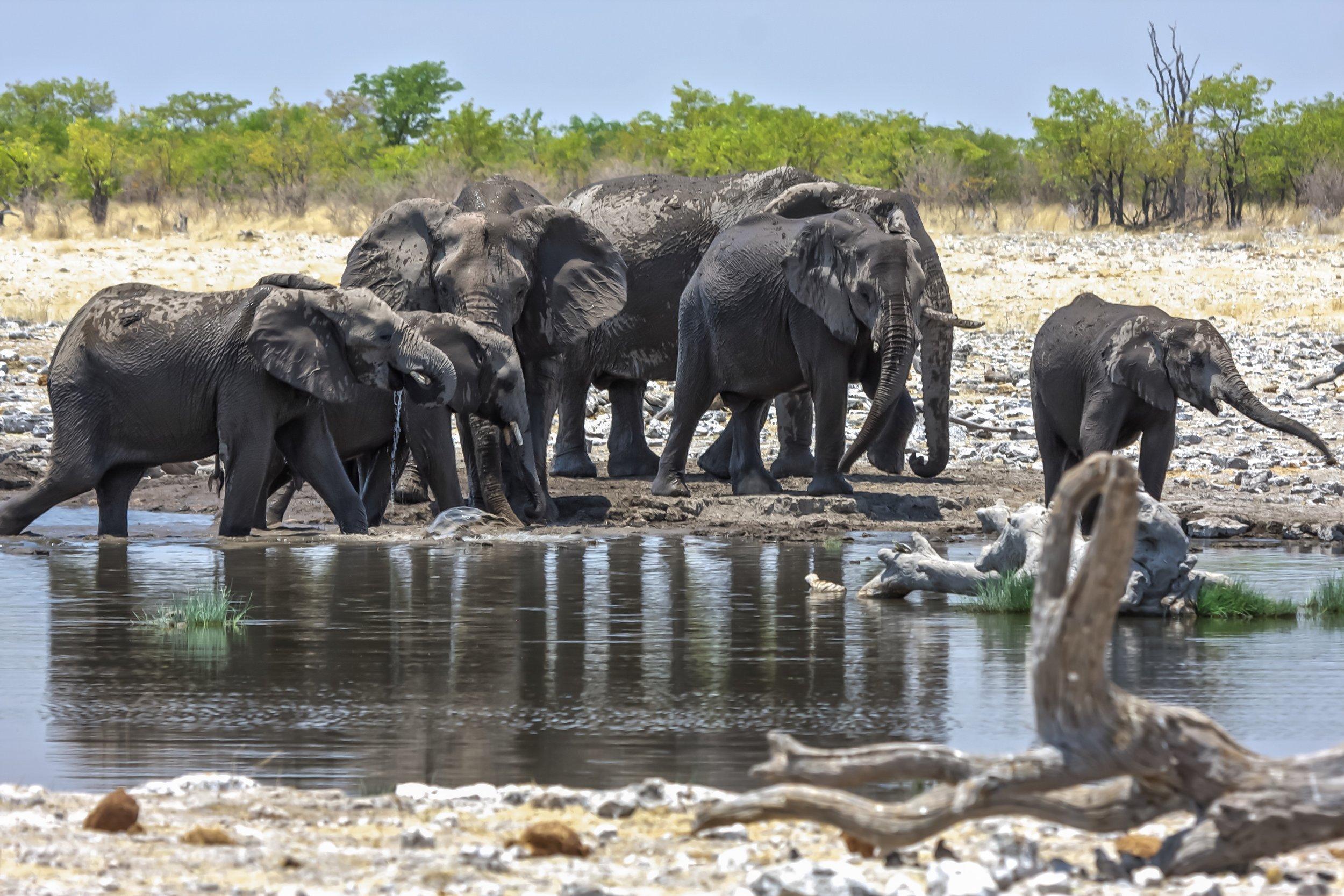 Eotsha Namibia.jpg