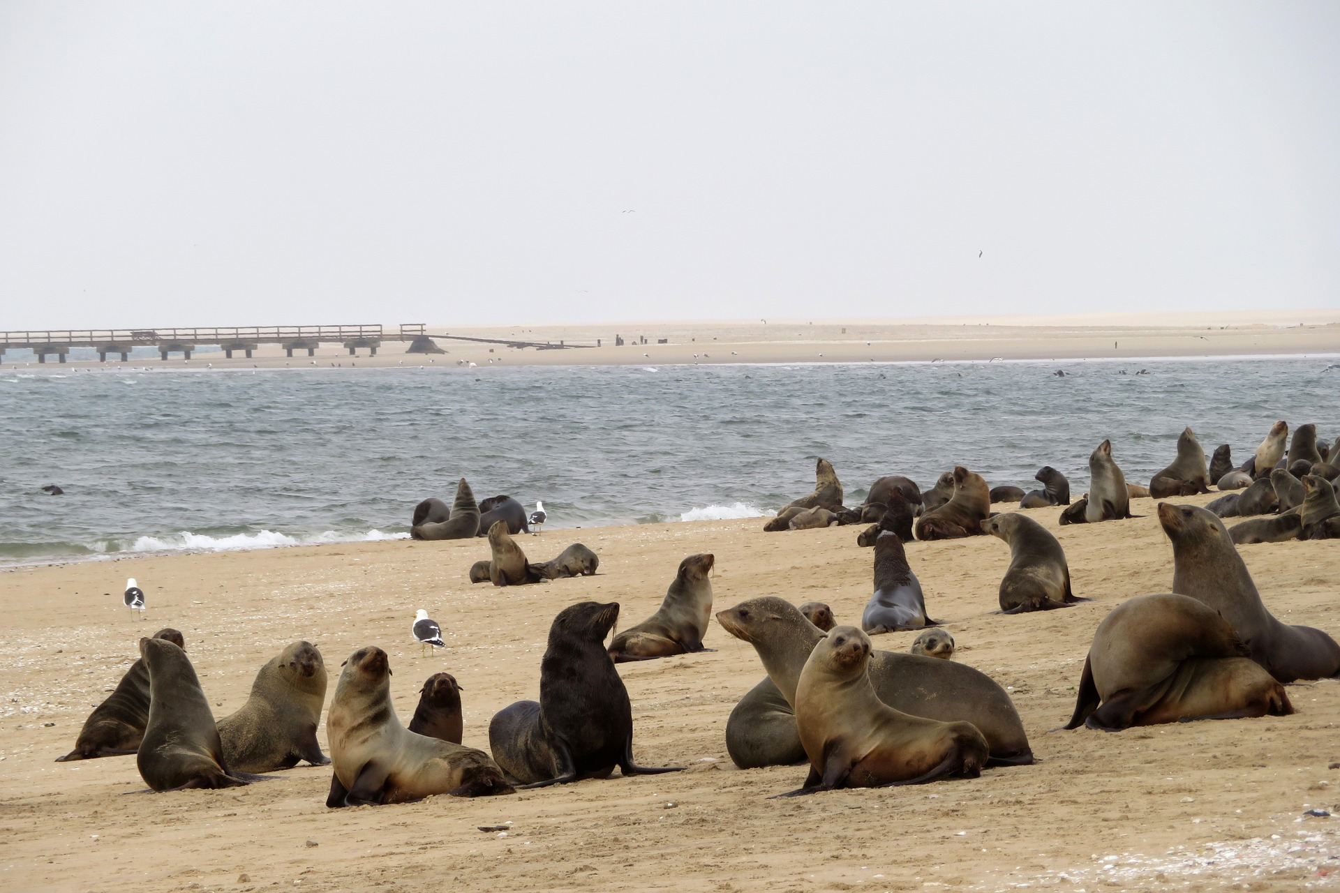 Cape Cross Sea Lions.jpg