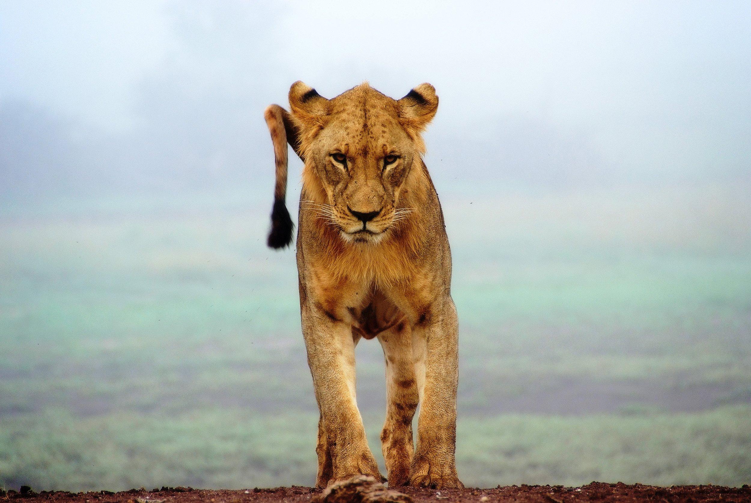 Tsavo West National Park, Kenya.jpg