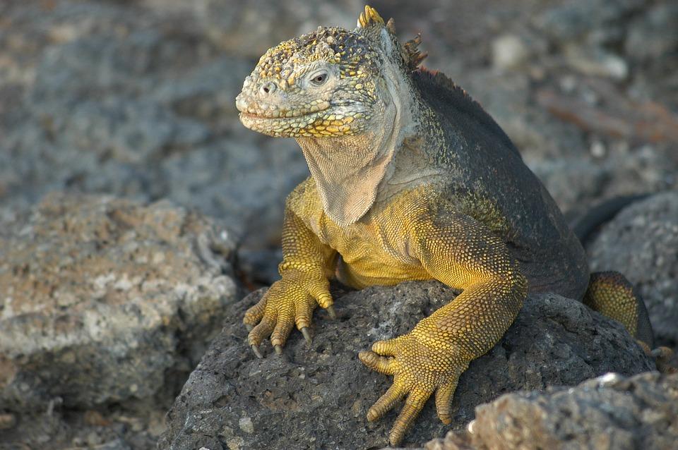 lizard-2113966_960_720.jpg