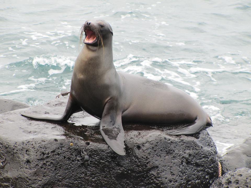 sea-lion-1646863_960_720.jpg