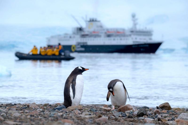 wildlife-in-antarctica-gentoo-penguins.jpg