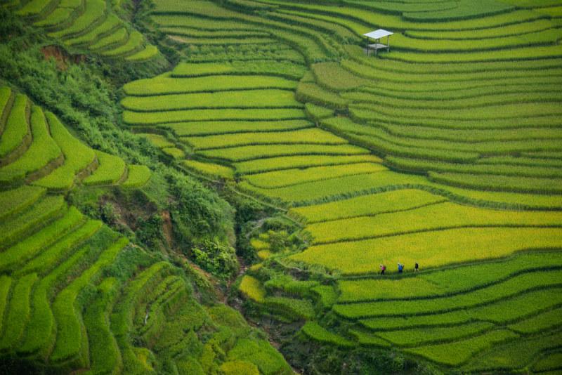 vietnam-cultural-adventure-rice-fields.jpg