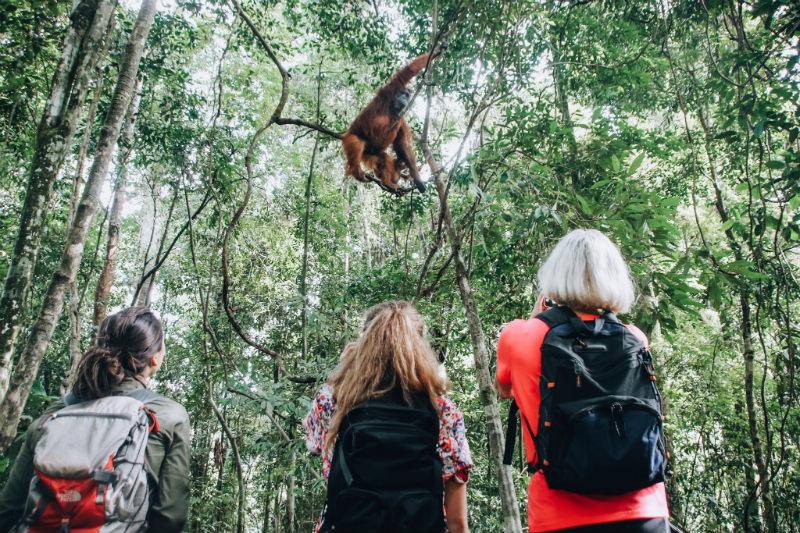 what-is-an-artisan-sumatra-orangutans.jpg