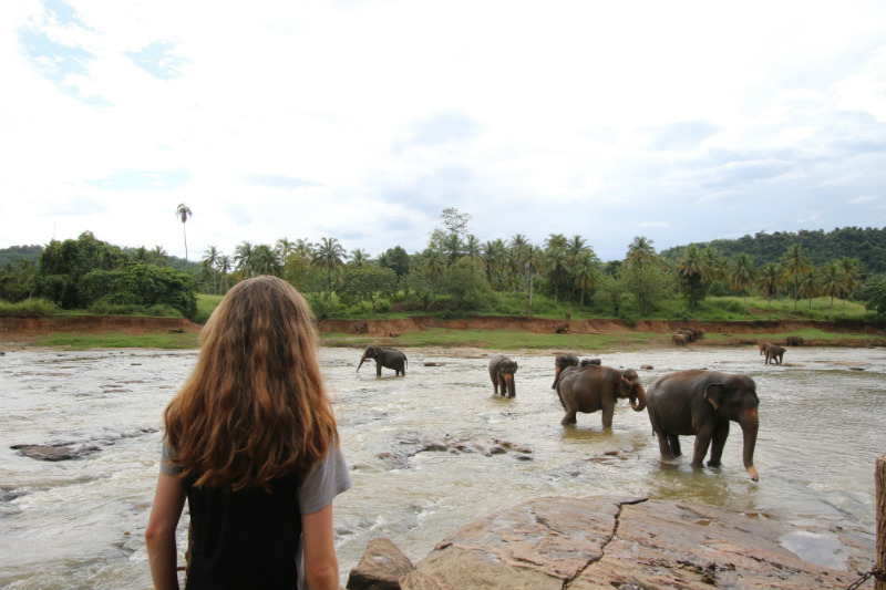 sri-lanka-expedition-pinnawala-elephant-orphanage.jpg