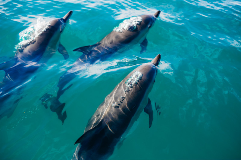 top-things-to-do-in-new-zealand-dolphin-whale-watching.jpg