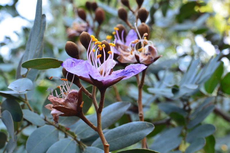 victoria-falls-adventure-flora-fauna.jpg