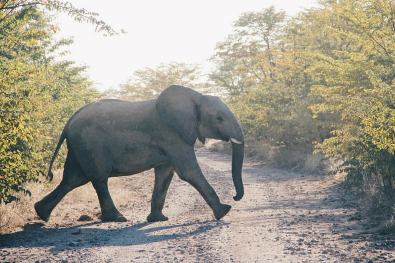 victoria-falls-adventure-elephant-zambezi.jpg