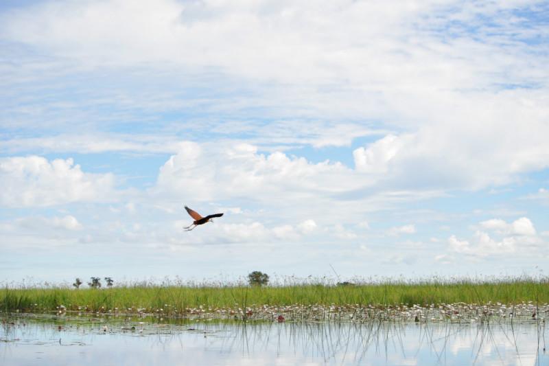 botswana-wetlands-safari-bird-clouds.jpg