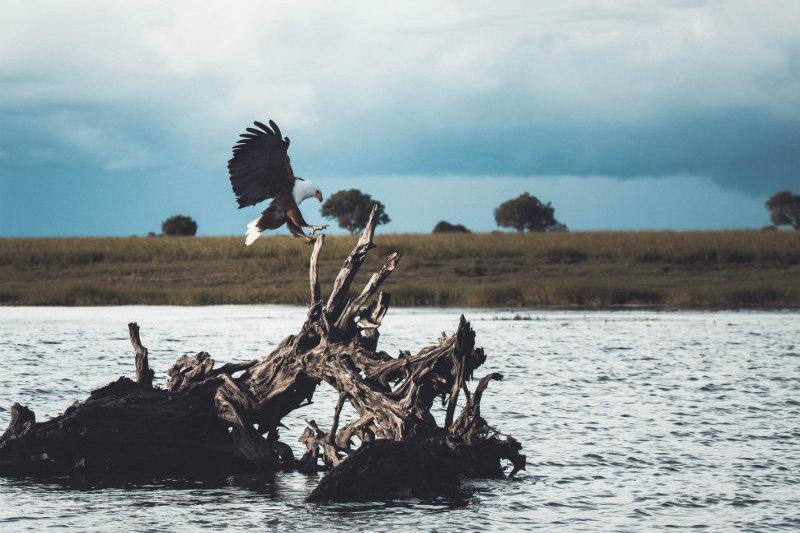 botswana-wetlands-safari-bird-river.jpg