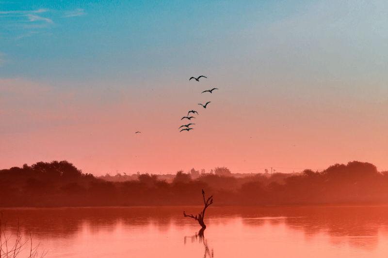 botswana-wetlands-safari-okavango-delta.jpg