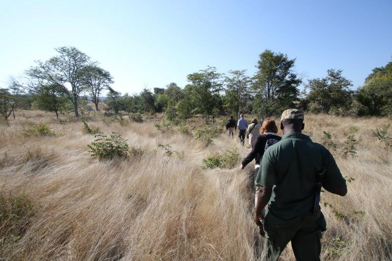 botswana-wetlands-safari-trekking.jpg