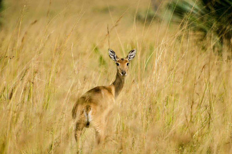 botswana-wetlands-safari-wildlife.jpg