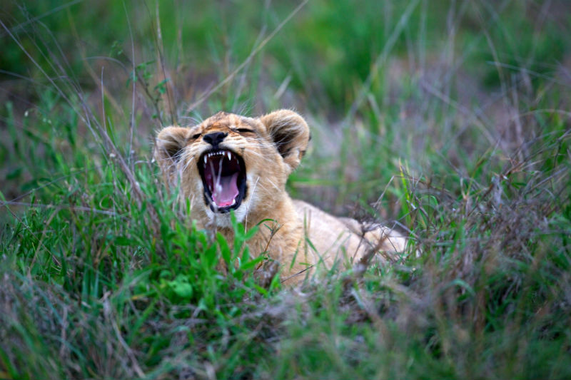 south-african-cities-and-safaris-kruger-national-park.jpg