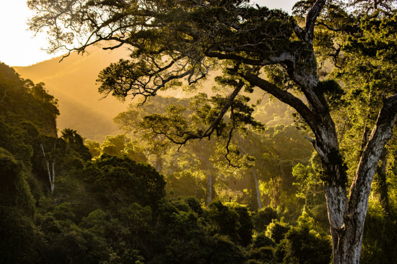 south-african-cities-and-safaris-trees.jpg