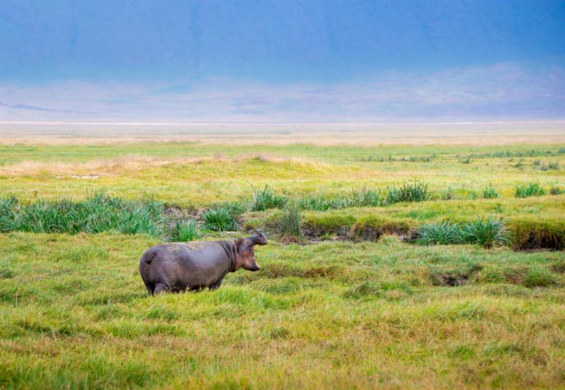 serengeti-wildlife-and-wonders-hippo.jpg