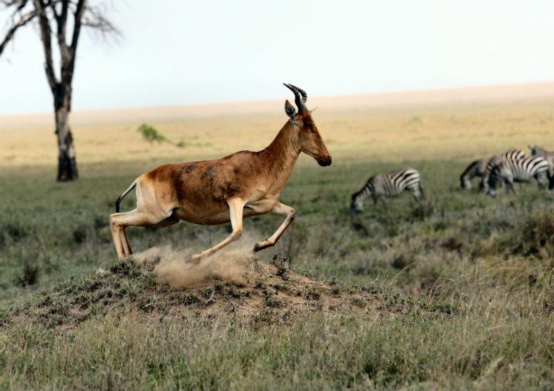 serengeti-wildlife-and-wonders-savanna.jpg