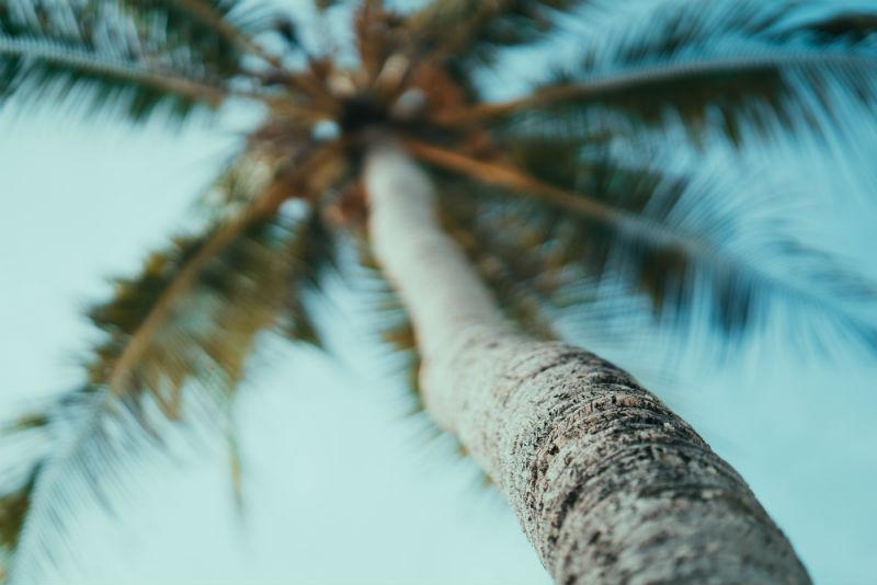 serengeti-wildlife-and-wonders-zanzibar-palm-tree.jpg