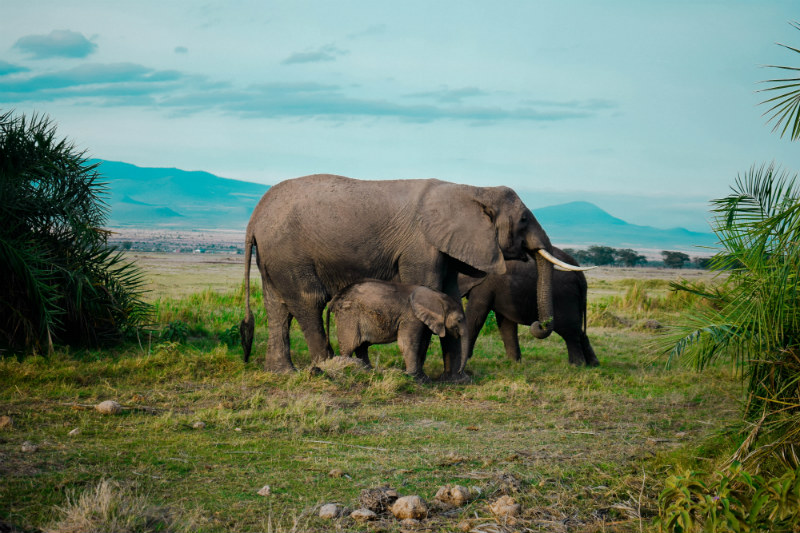 kenya-wildlife-safari-elephants.jpg