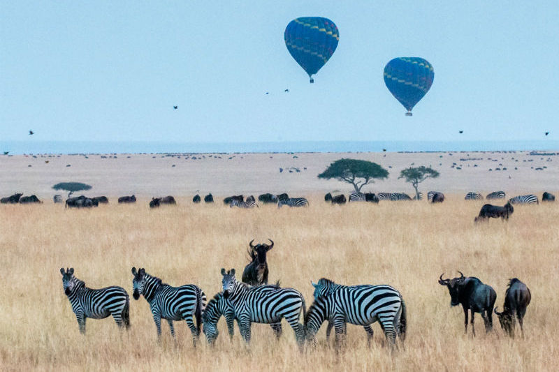 kenya-wildlife-safari-hot-air-balloons.jpg