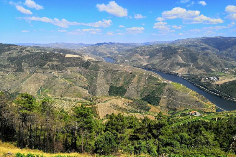 best-day-trips-from-lisbon-vineyards-wine-regions.jpg