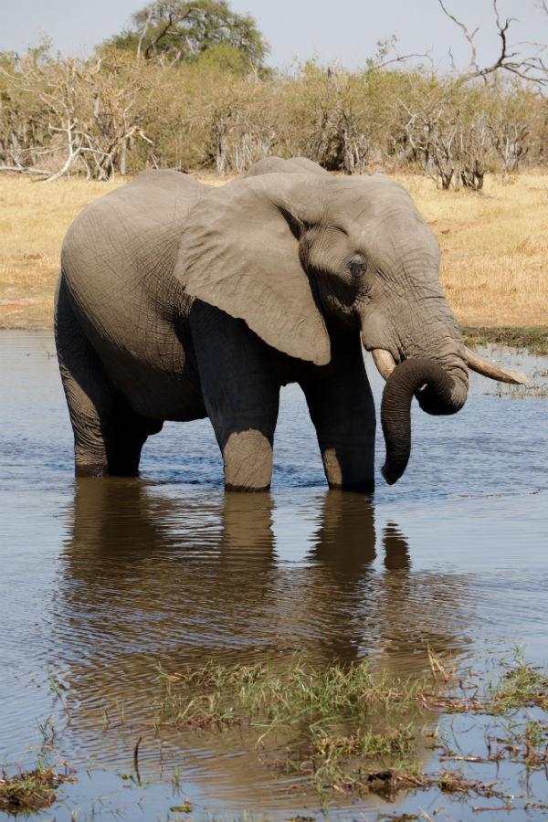 traveler-review-african-safari-botswana-elephant.jpg