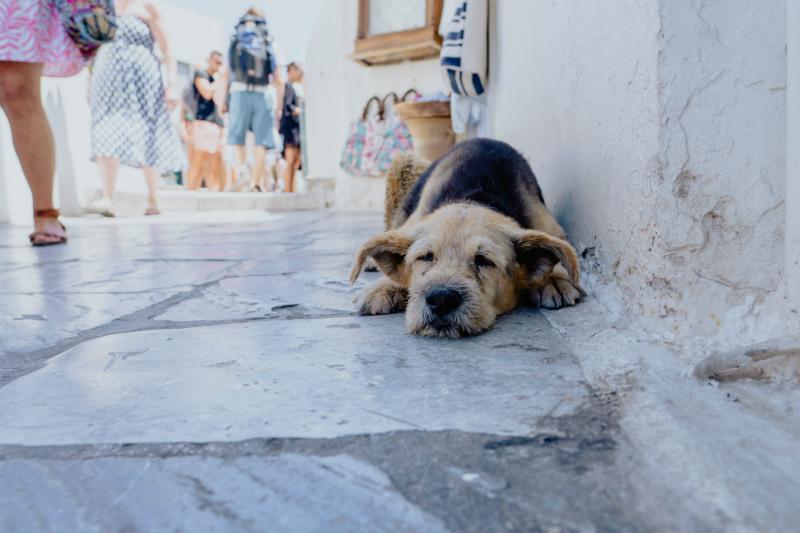 arts-and-crafts-greece-workshop-dog-santorini.jpg