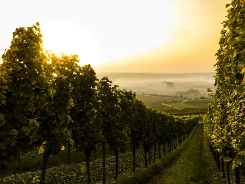 artisans-of-italy-vineyards.jpg