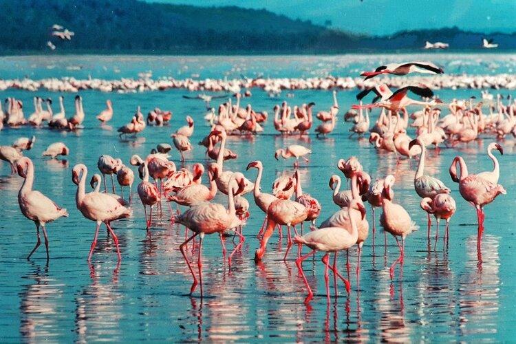 pink-flamingo-1484781_1920 (1).jpg