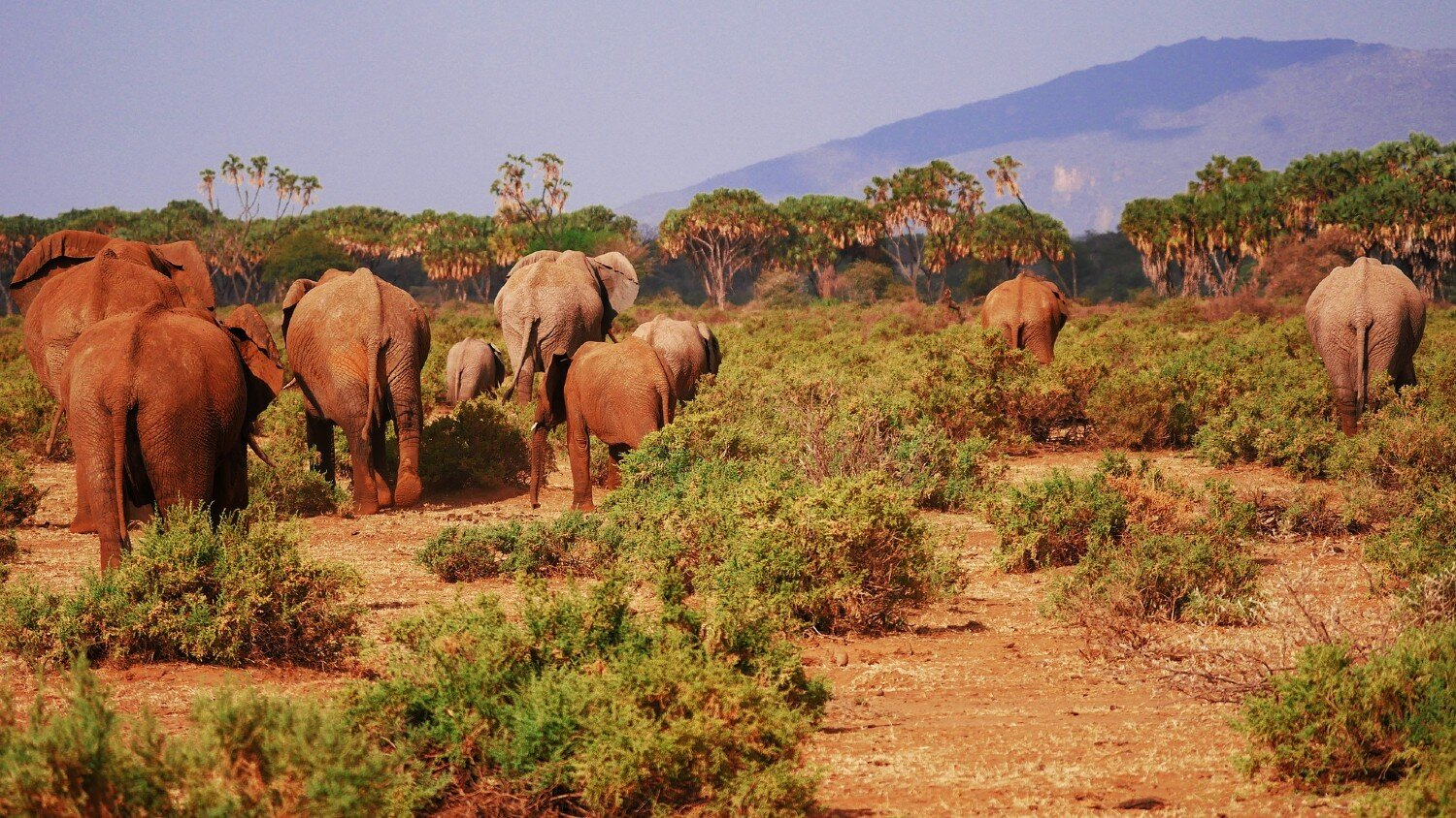 Why Kenya National Parks Should Be on Your Bucket List