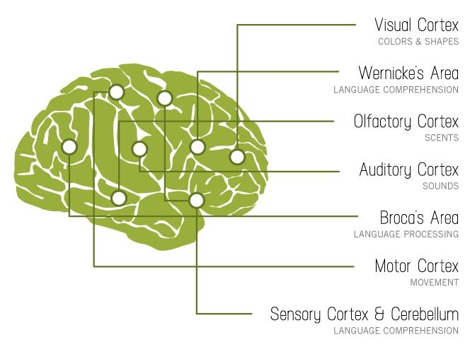brain-on-stories