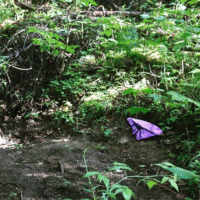 As a Vermonter, I hate littering. However, this garbage at first glance looks like a purple frog! Spotted on our otherwise liter-free trails 🌱